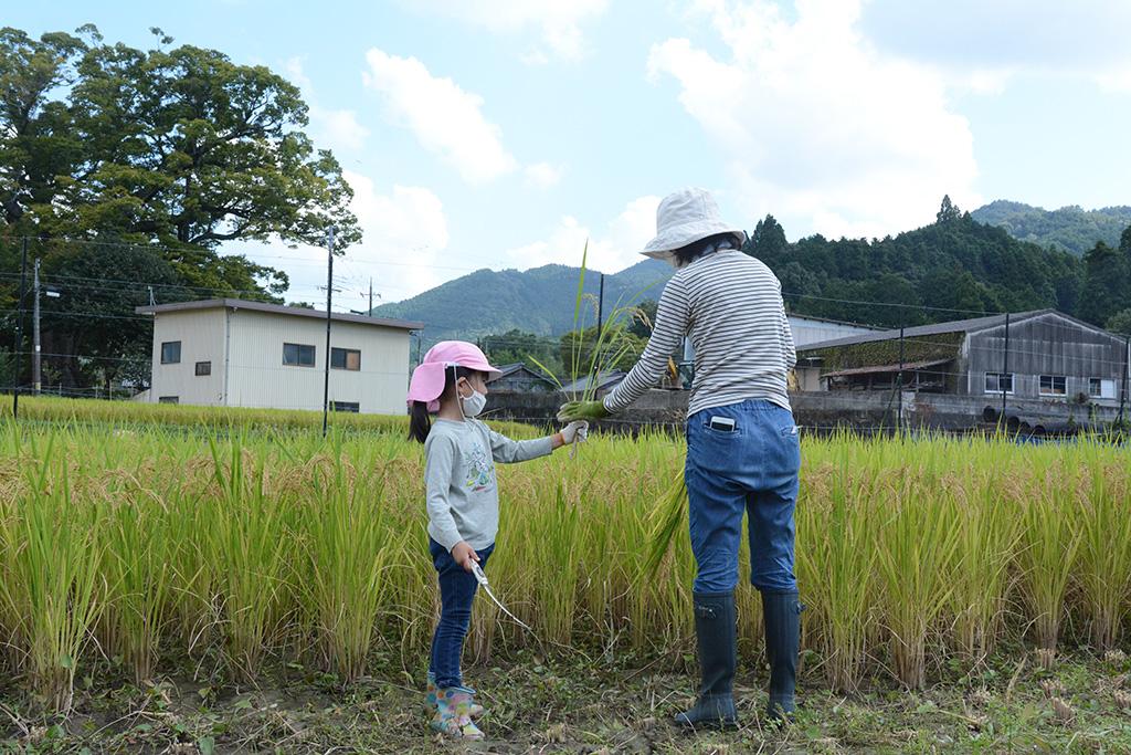 稲のリレー2